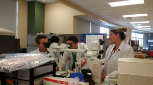 Residents in the hematology lab, looking at a peripheral smear.